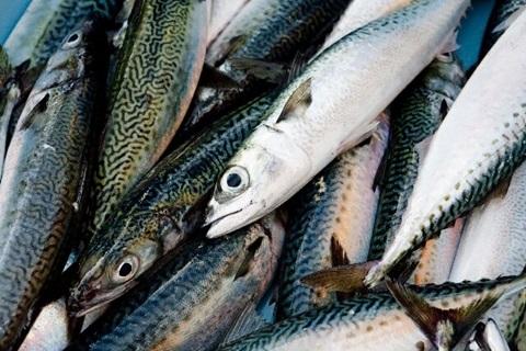 メタボよさらば!美肌にも効果的!青魚【EPA】の6つの効能