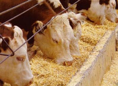 安くても美味しく!外国産牛肉の臭いを上手に消す8つの方法