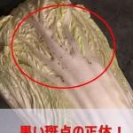 白菜の葉先や茎に黒い点!食べても大丈夫?返品するべき?!