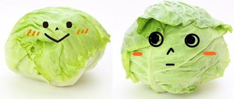 キャベツとレタスの見分け方!見た目の違いは?栄養価や使い方について