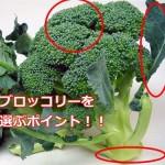 新鮮で美味しいブロッコリーの見分け方!見極める5つのポイント