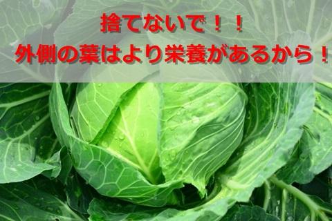 キャベツの芯や外側の葉は栄養が高い!美味しく変身する方法