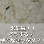 米に虫がわいた時は捨てる!?食べられる?対処法と保存法