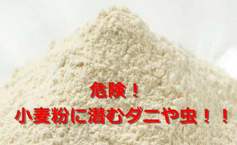 小麦粉の賞味期限切れはいつまで大丈夫?未開封でもダニの温床に!