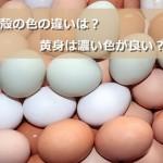 茶色の卵と白い卵、栄養価が高いのは?黄身の色の違いについて